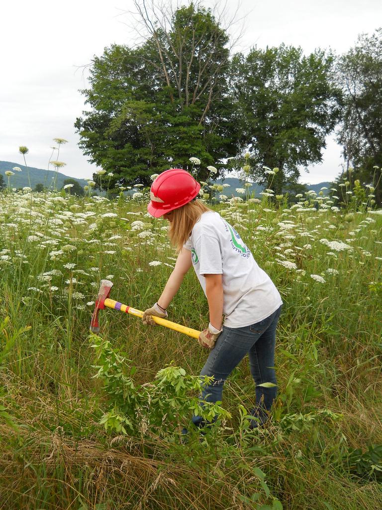 Controlling invasive species