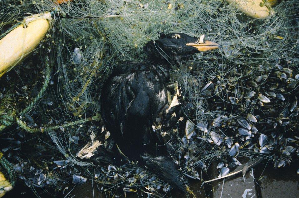 Drift net with bird, 2