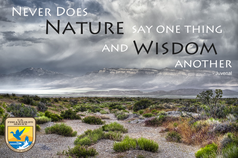 Nature and Wisdom