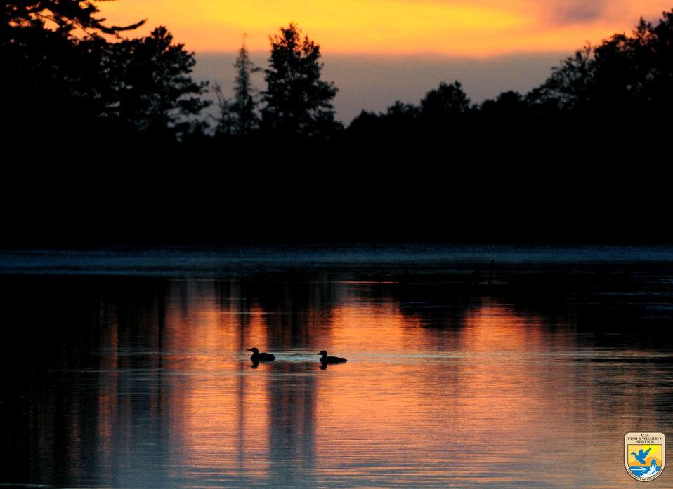 Waterfowl - Region 3