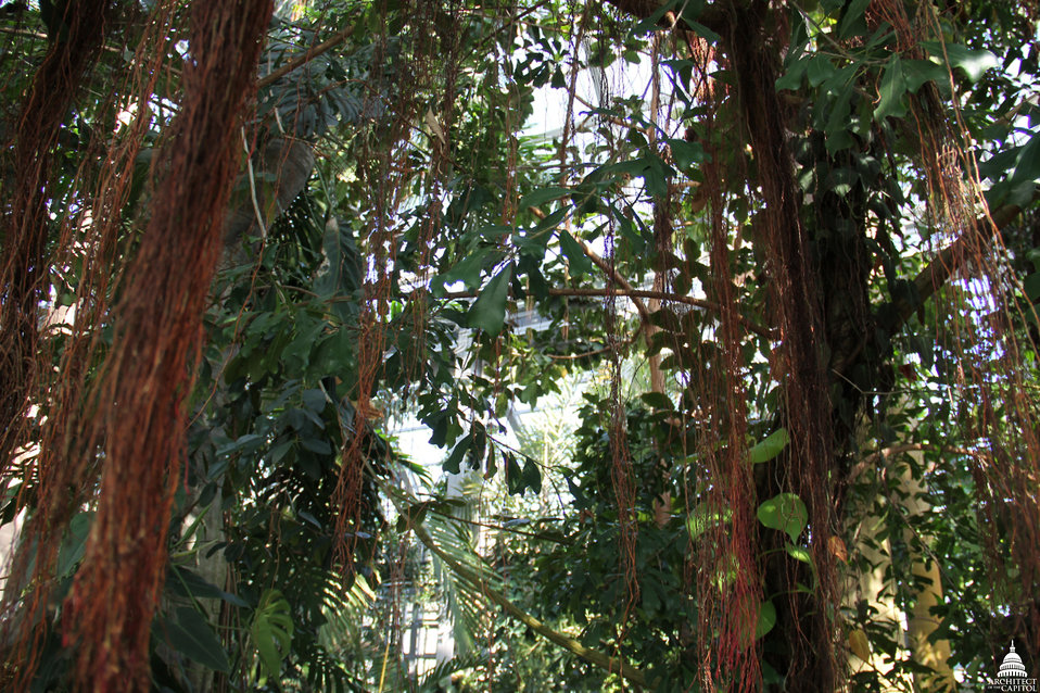 Jungle Room at USBG Conservatory