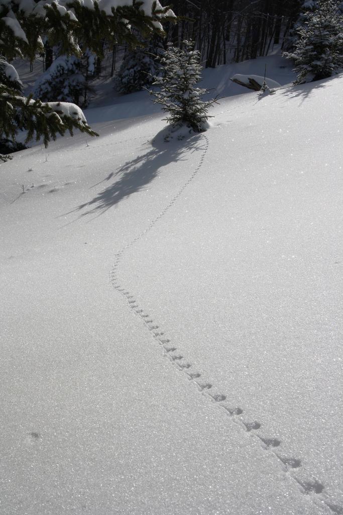Photo of the Week - Tracks in Snow (WV)
