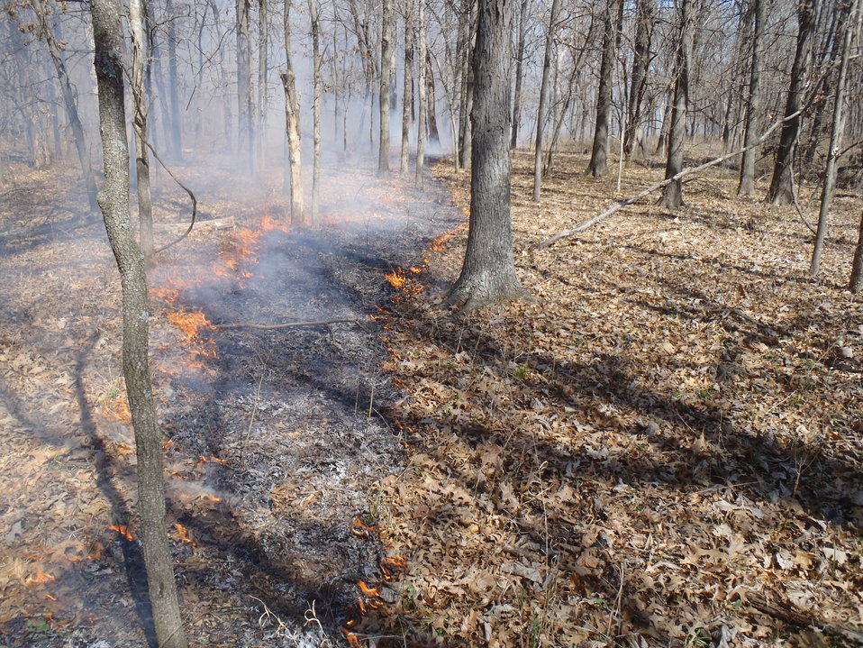 Fire Management in the Bottomland Hardwoods