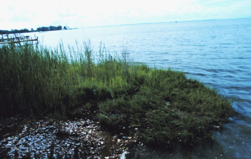 Grass, shells and docks along Tilghman Island.