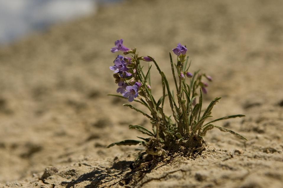 Colorado Rare Plant Conservation Initiative