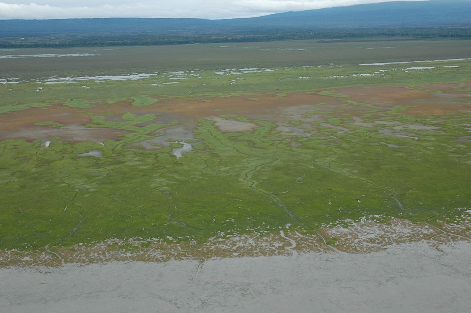 Aerial photograph. Tidal wetlands in the Susitna River Delta.