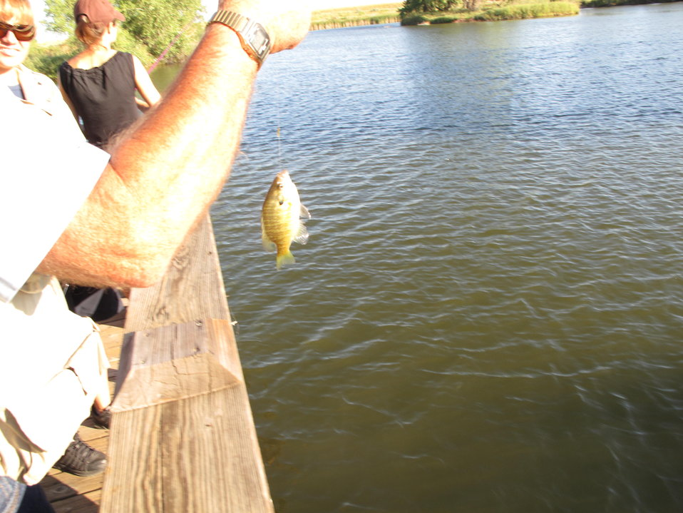 Caught a Fish