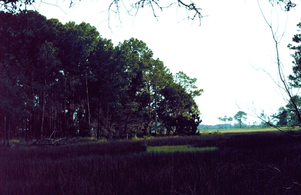 The transition between marsh and upland maritime forest.