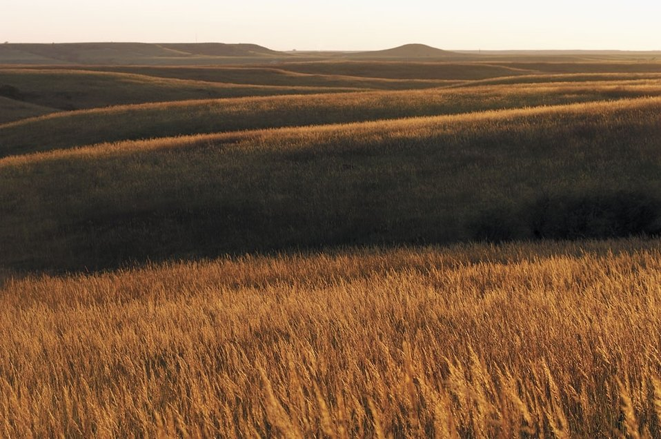 Golden Konza Tallgrass Prairie