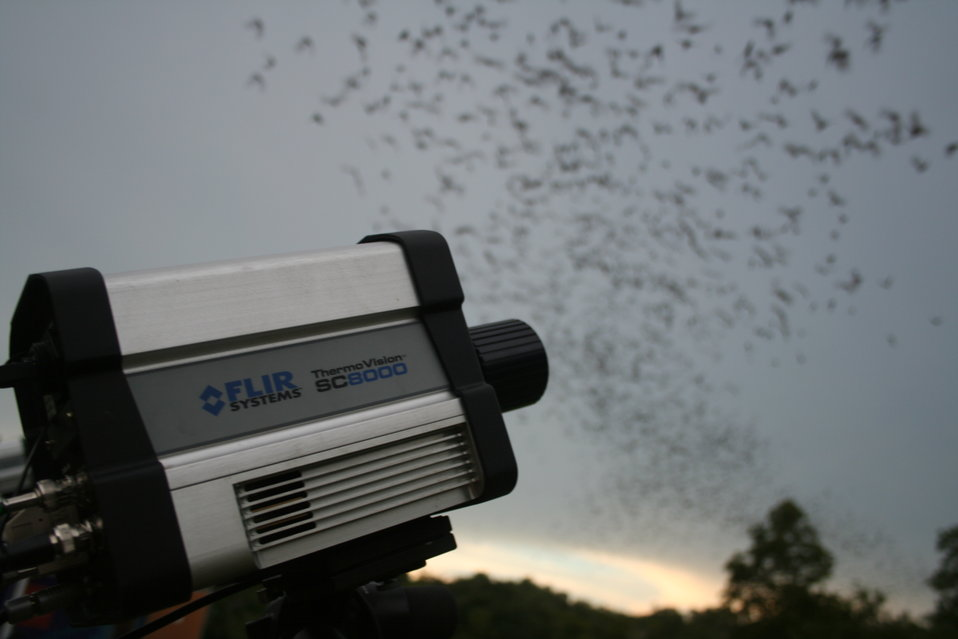 Camera trained on emerging bats