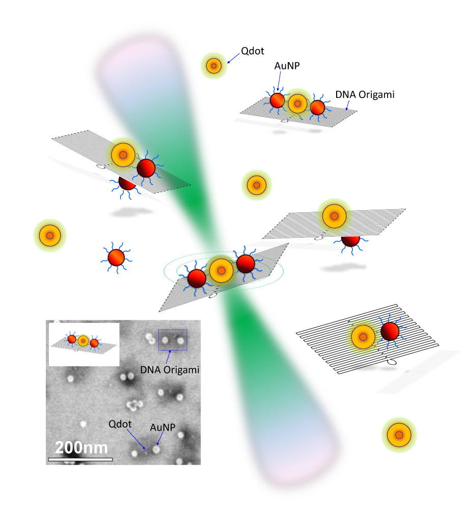 Quantum Dots and Gold Nanoparticles