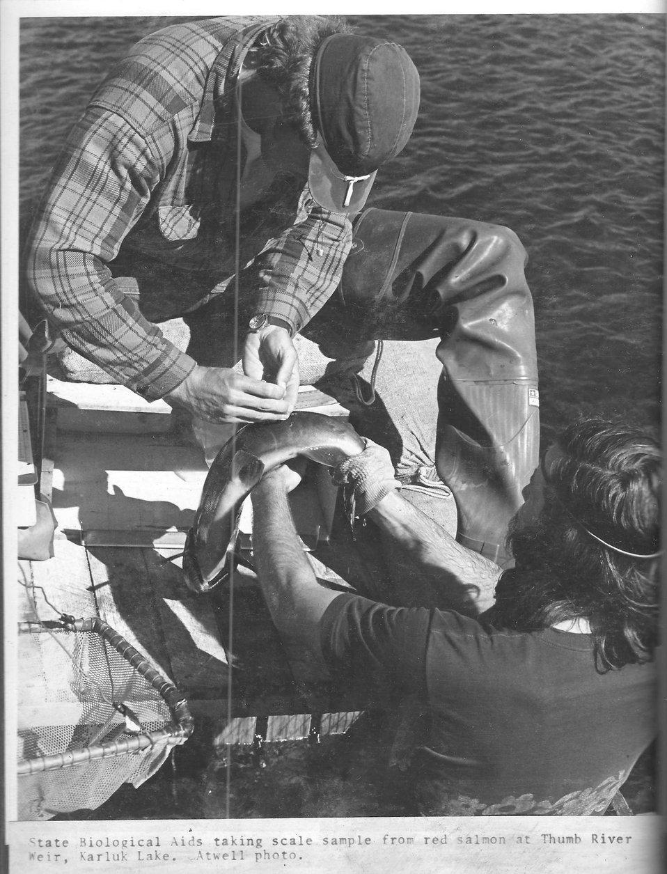 (1972) Salmon Sampling