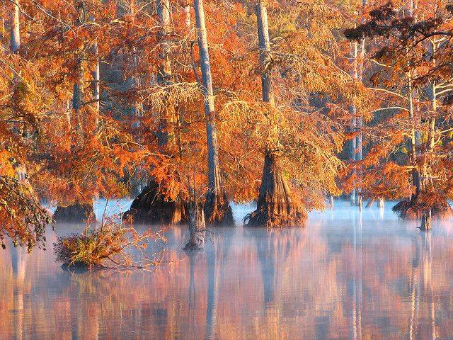 Sam D. Hamilton Noxubee National Wildlife Refuge