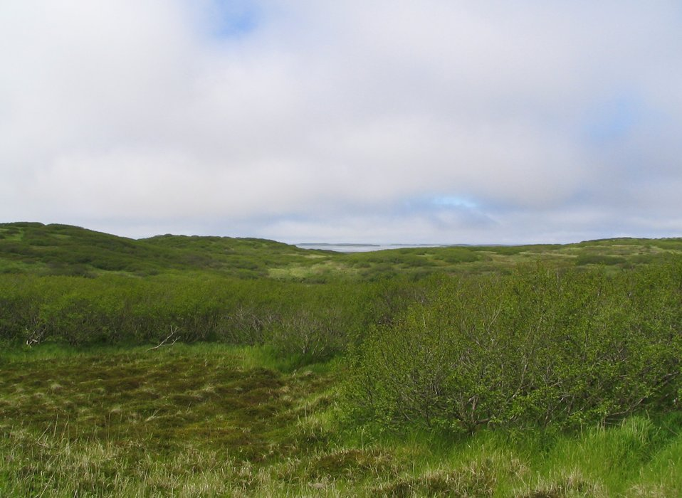 Tundra near Baldy Mountain