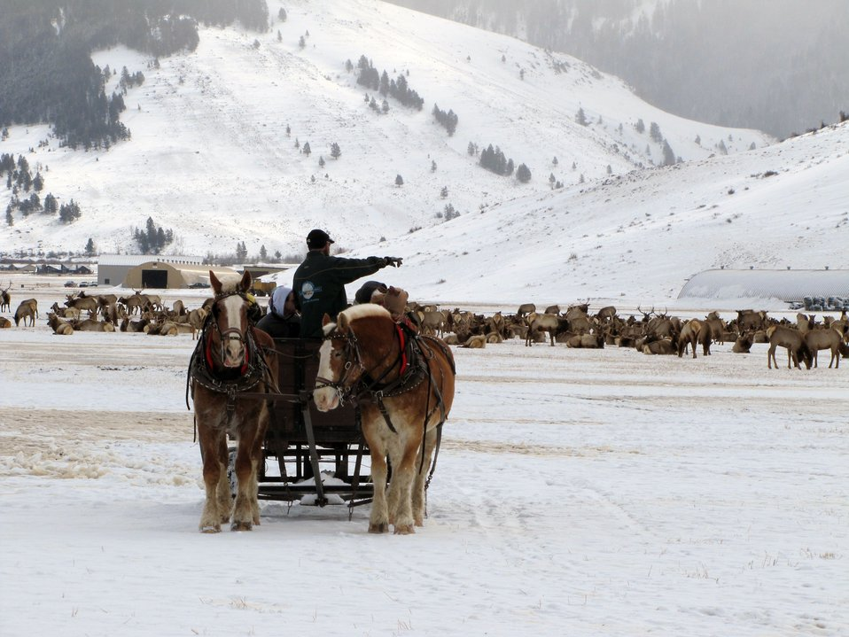 Sleigh ride in elk country