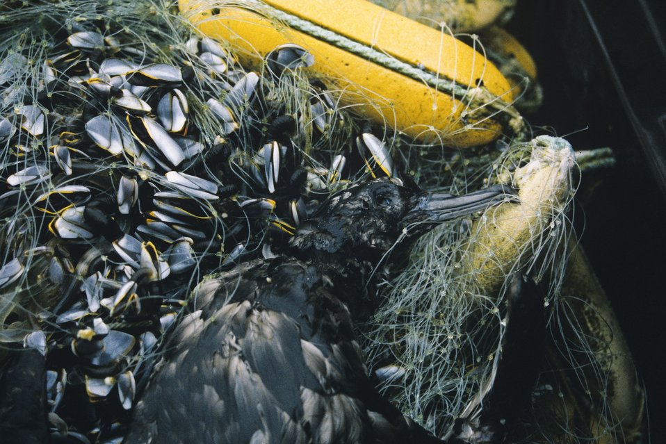 Drift net with bird