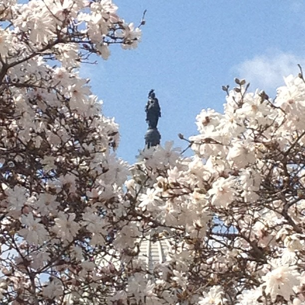 Blue sky, trees in full flower. Freedom from Library of Congress.
