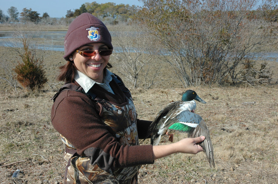 Biologist Banding a Northern Shoveler