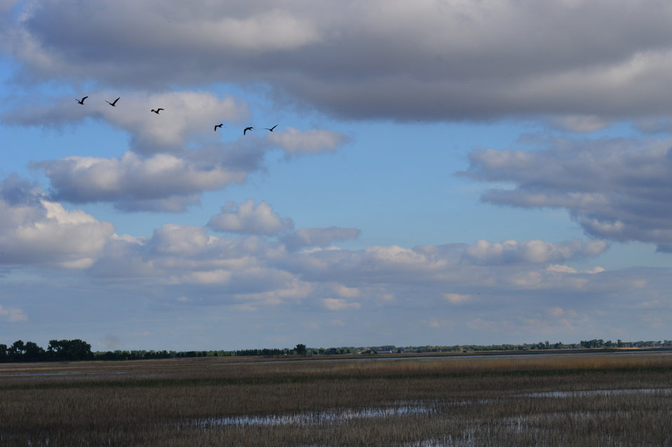 Flock of birds over Sand Lake NWR