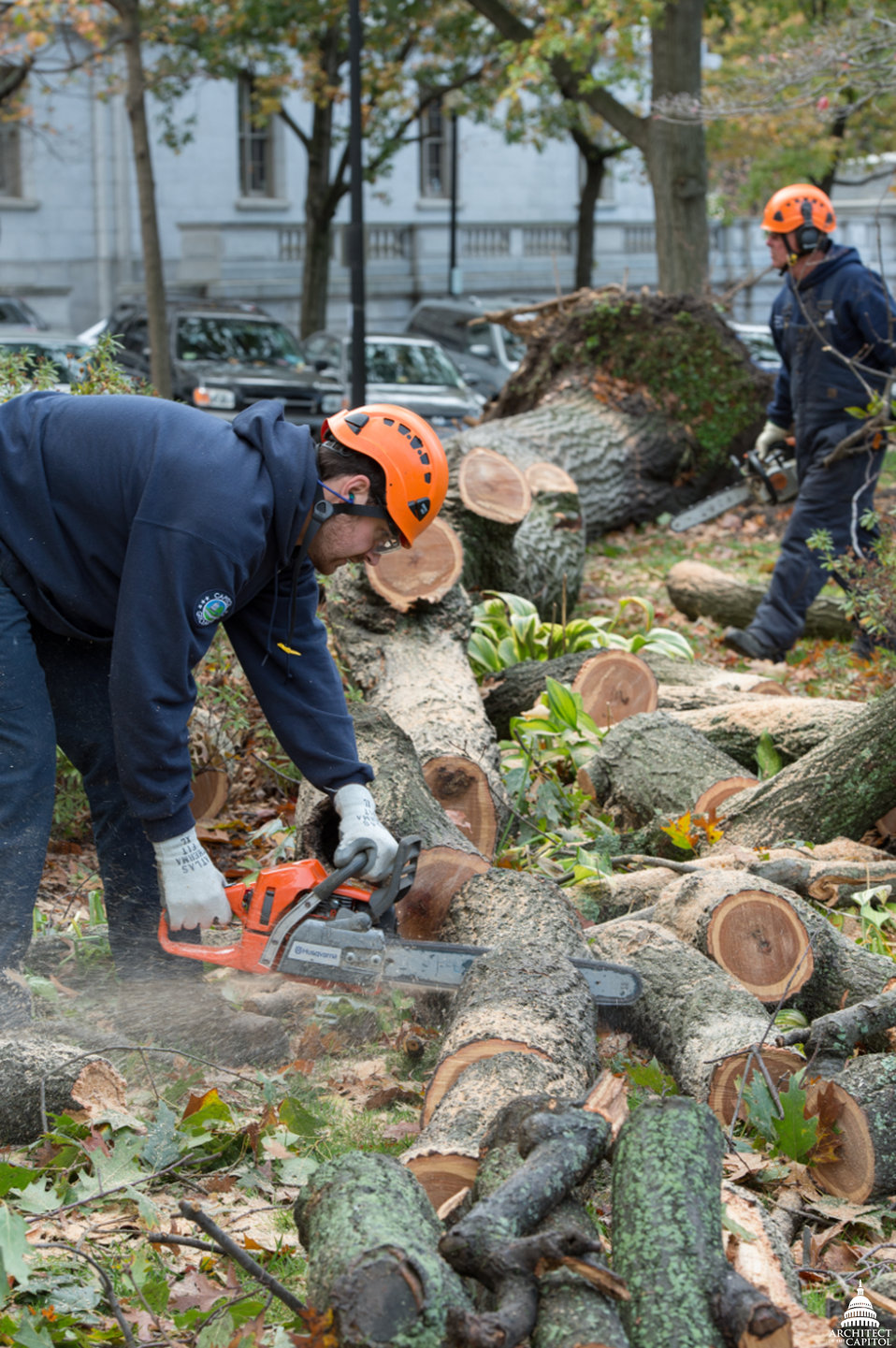 Hurricane Sandy Clean-up