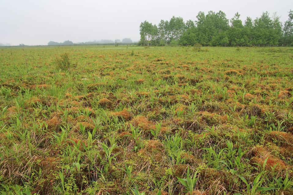 Haircap Moss Wetland