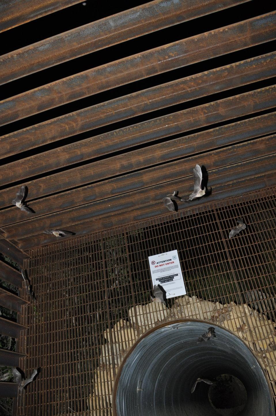 Bats exiting mine