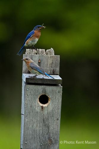 Nest Box Parents
