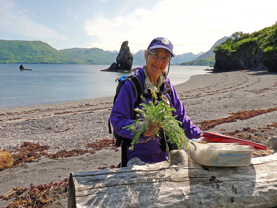 Volunteer Stacy Studebaker collects plant specimens in Uganik Bay