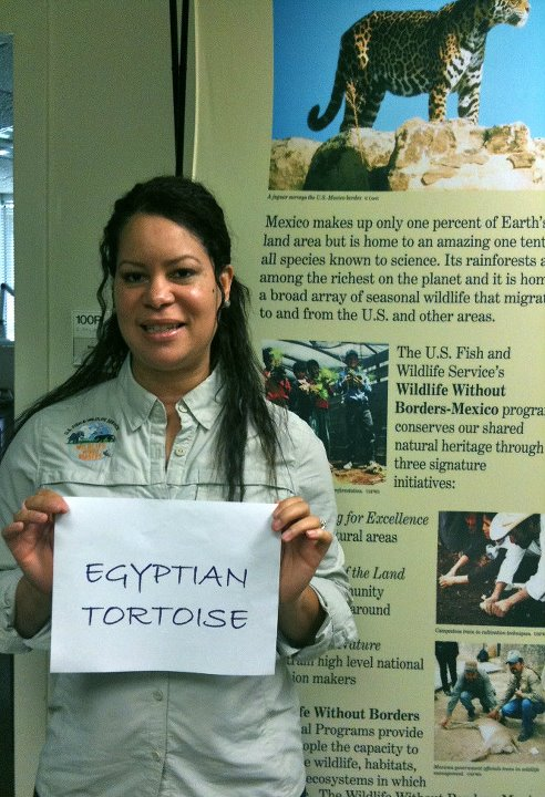 Valencia Richardson, 'Egyptian Tortoise,' Credit: USFWS