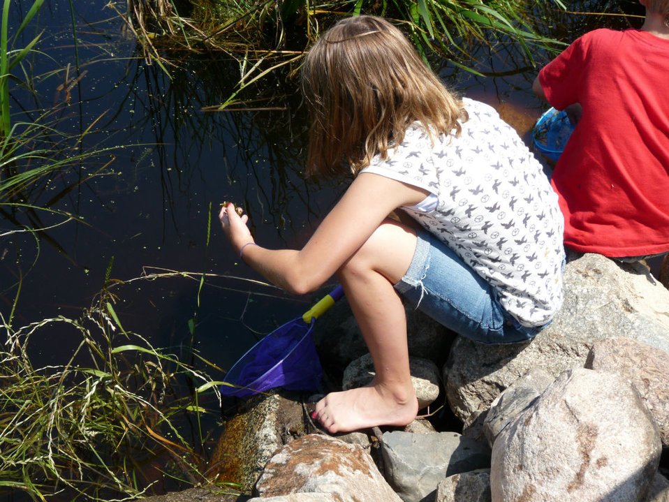 Learning about aquatic plant species