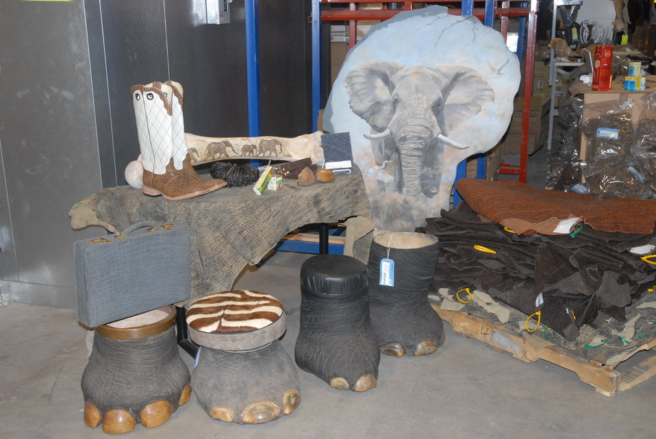 Elephants are being slaughtered for ivory and other parts at unprecedented rates.