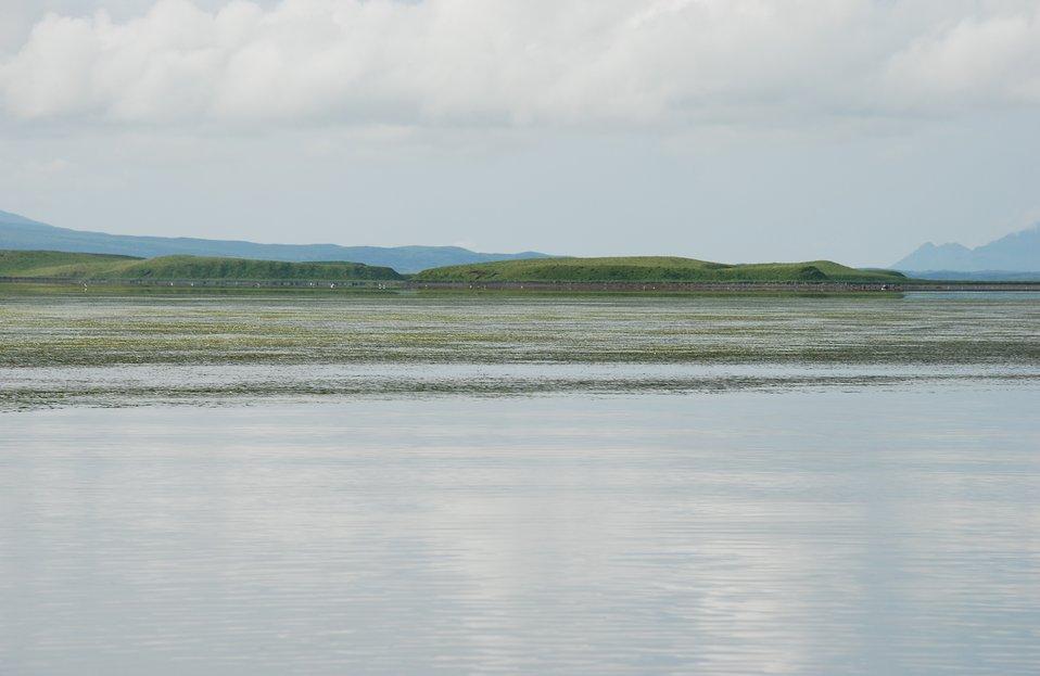 Eelgrass in Izembek Lagoon