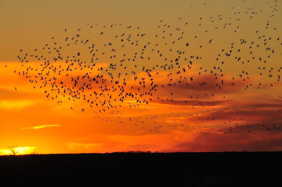 Mallards at Sunset on Sand Lake NWR 02