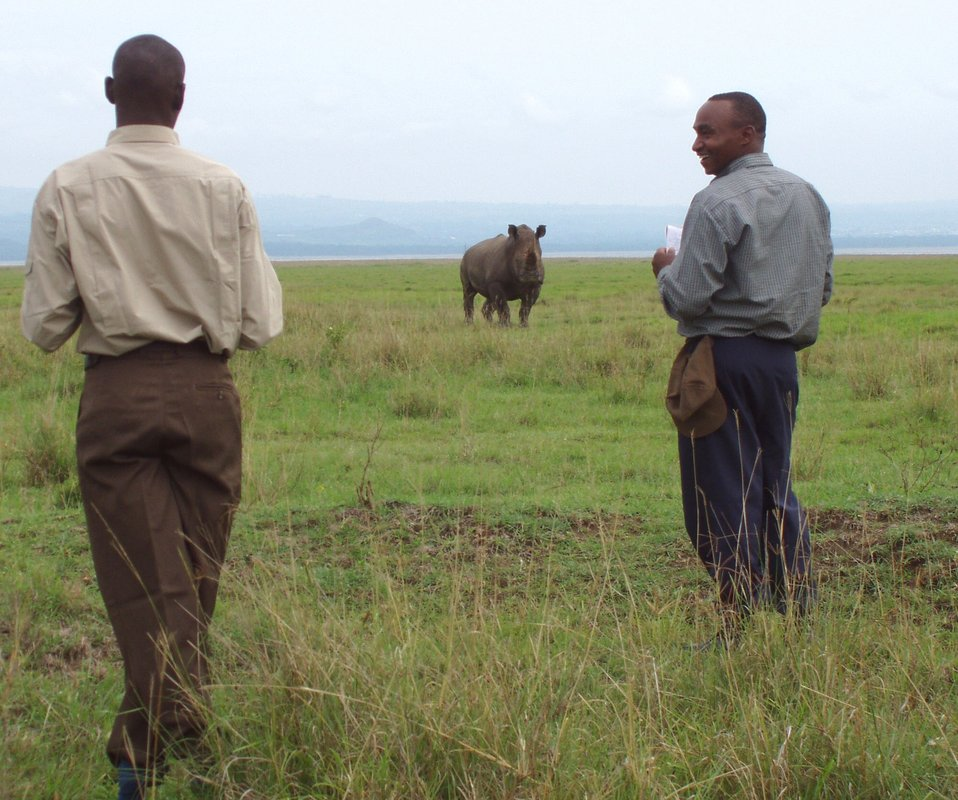 White rhino monitoring