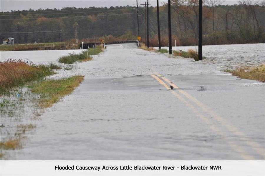 Blackwater National Wildlife Refuge after Hurricane Sandy (MD)