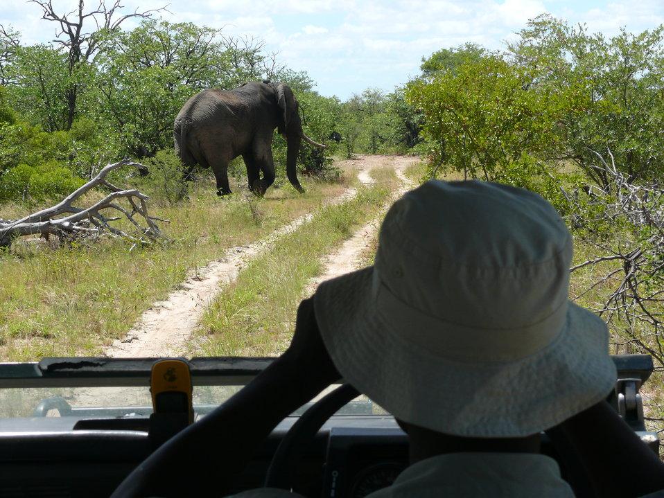 Elephant monitoring 2
