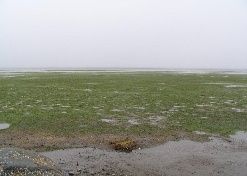 Eelgrass in Kinzarof Lagoon