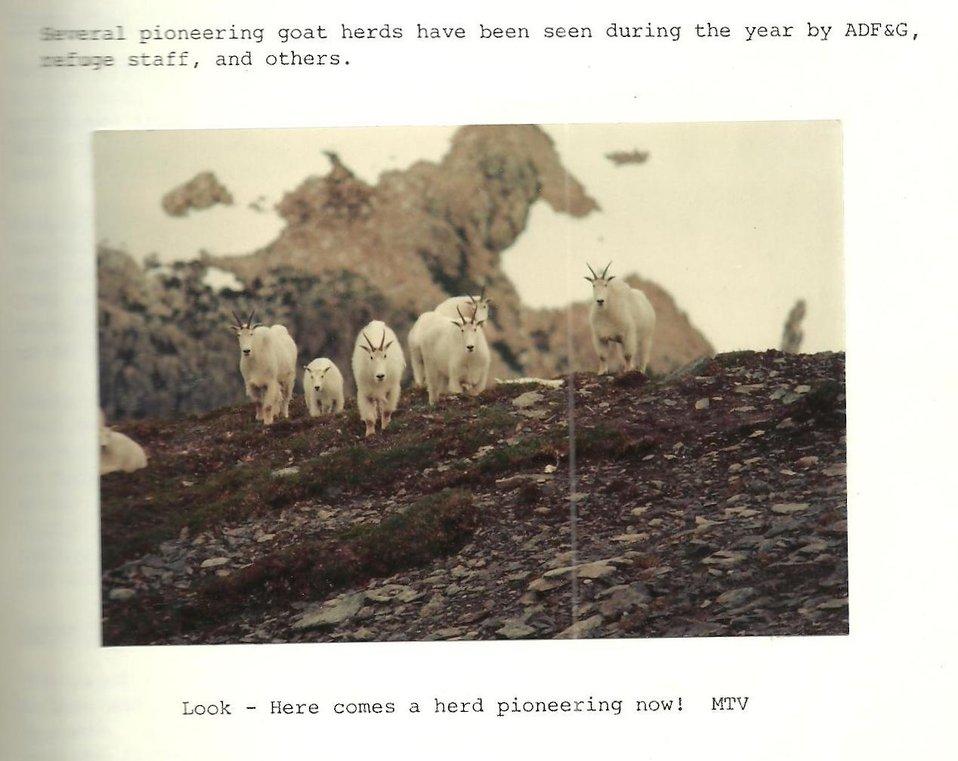 (1981) Pioneering Herd