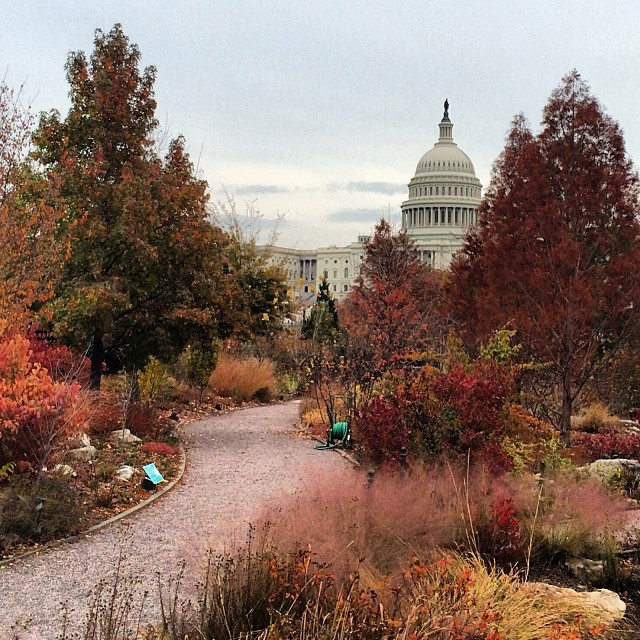 US Botanic Garden & #CapitolDome on warm Nov. day in #DC.