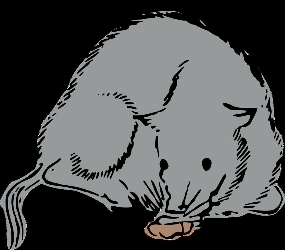 AGU-Pig