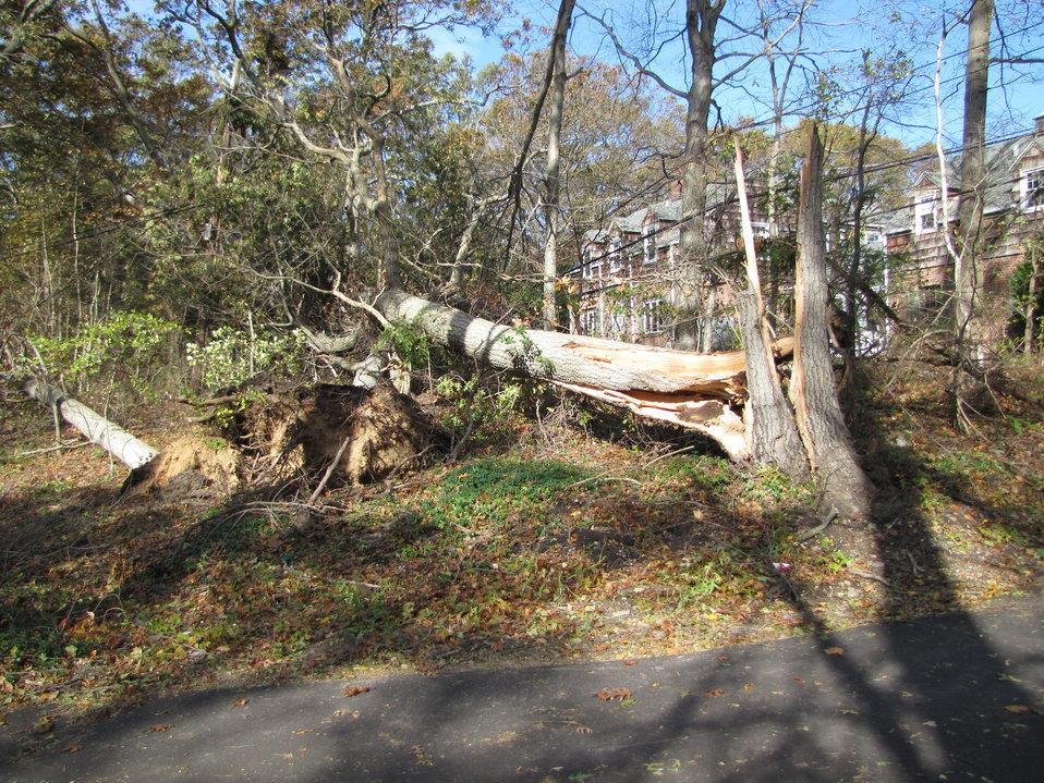 Power line damage at Target Rock National Wildlife Refuge (NY)