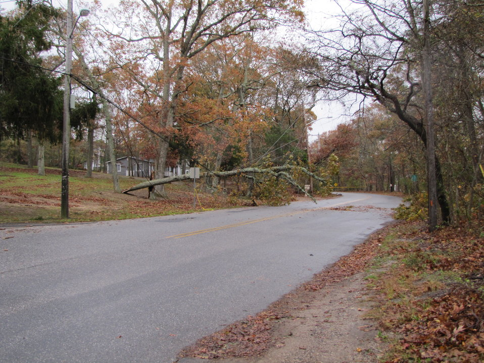 Power line damage at Wertheim National Wildlife Refuge (NY)