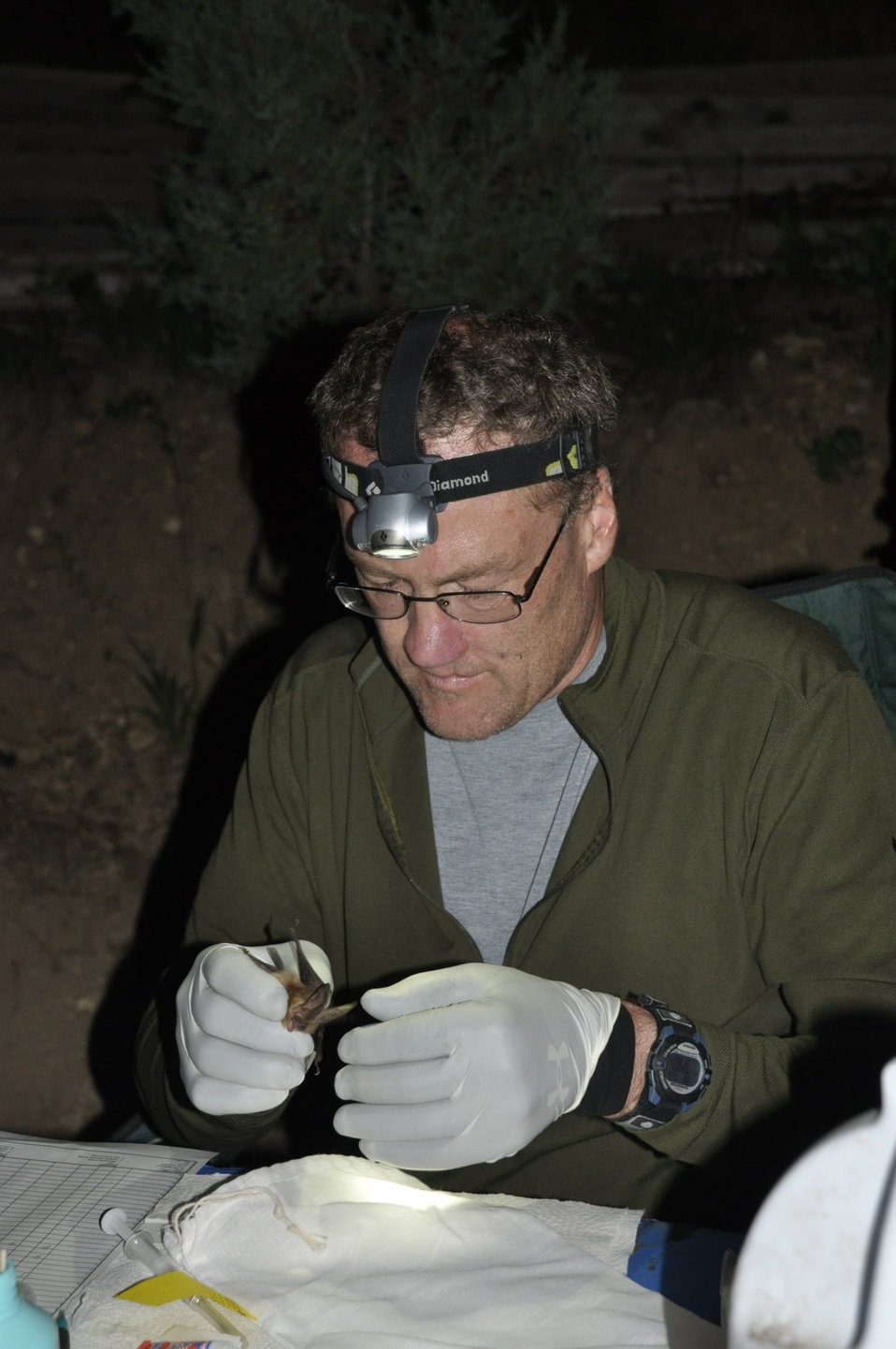 NPS wildlife vet inspects bat