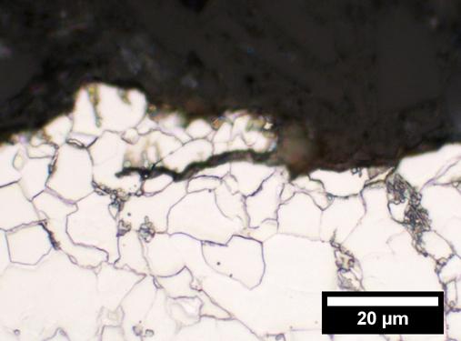 Ethanol-Loving Bacteria