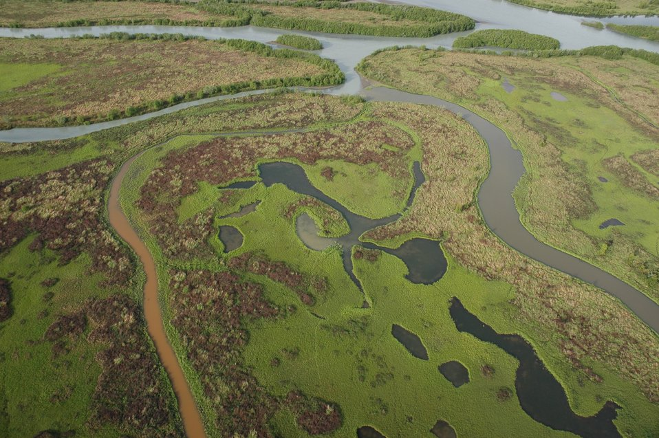 Aerial photograph. Meandering streams in the intertidal zone.