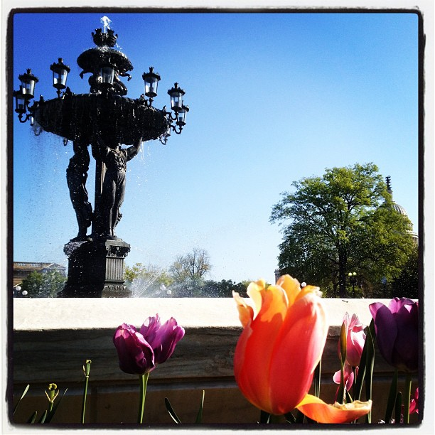 Need serenity now? Stop by and enjoy the restored Bartholdi Fountain now open for season. #dc