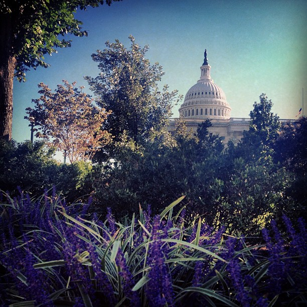A beautiful evening on Capitol grounds