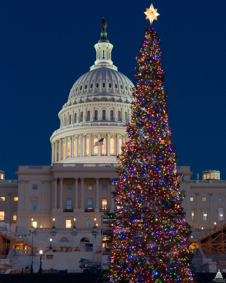Capitol Christmas Tree - 2008