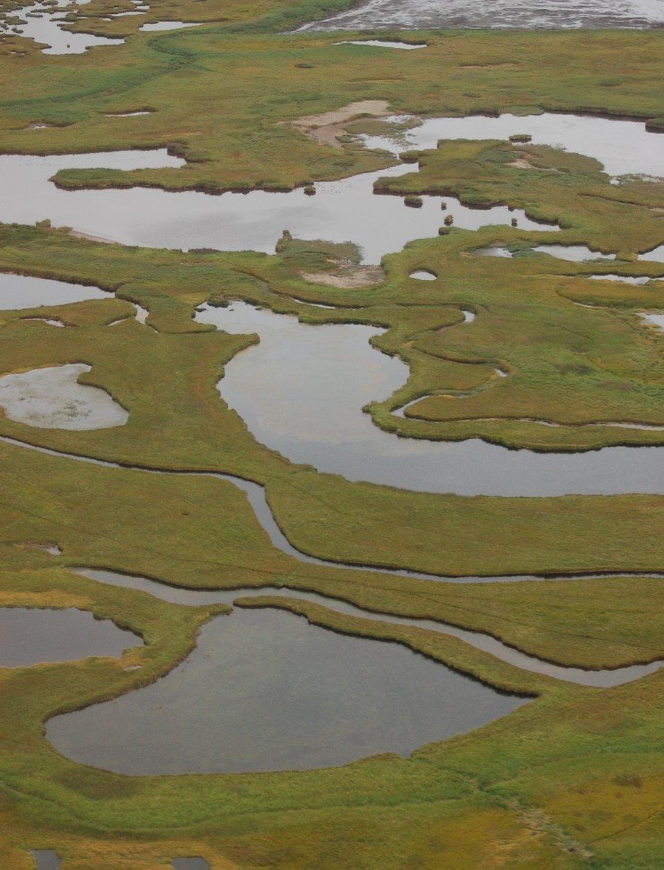 Izembek wetlands