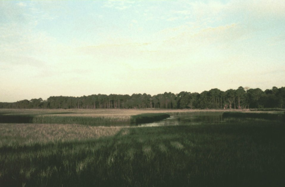 Salt marsh on the north end of Sapelo Island.
